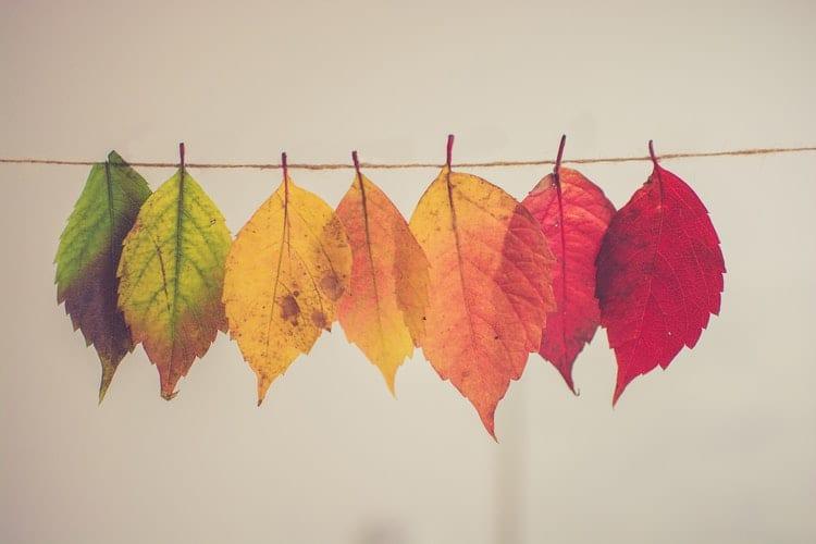 Come arredare la casa in autunno con elementi naturali