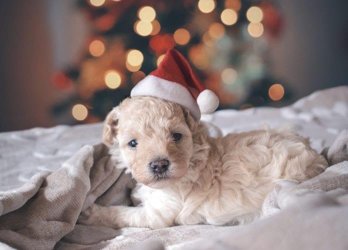 I tessili giusti per una camera da letto di desig anche a Natale