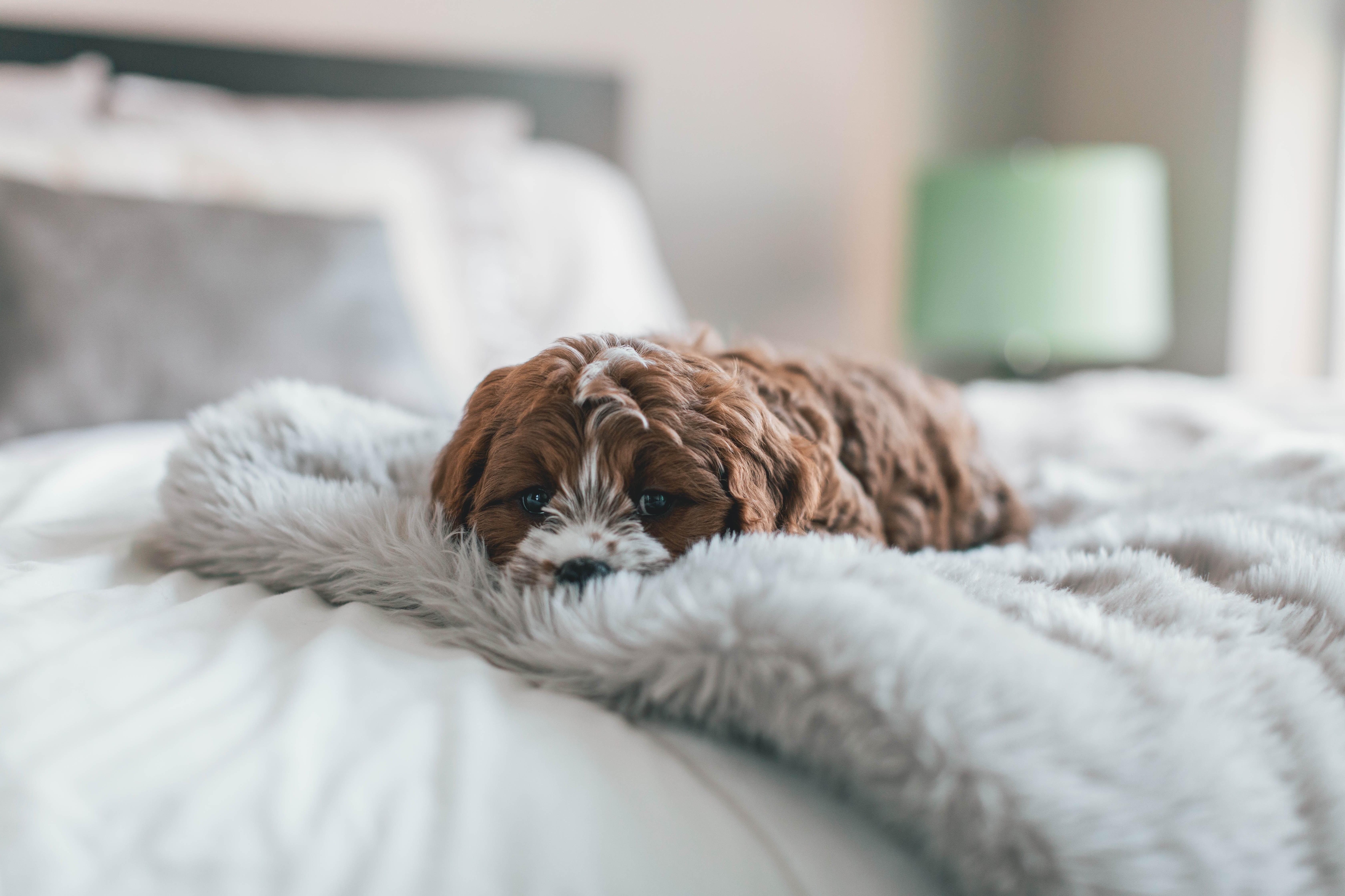 Stance da letto da sogno al alto comfort